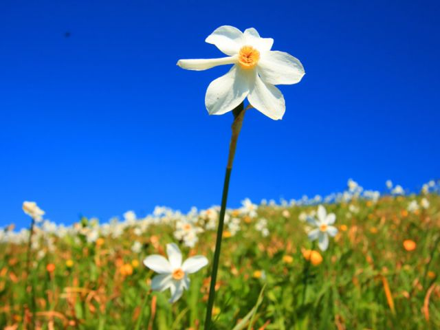 iStock-1048349154-daffodil-on-mountain-for-web